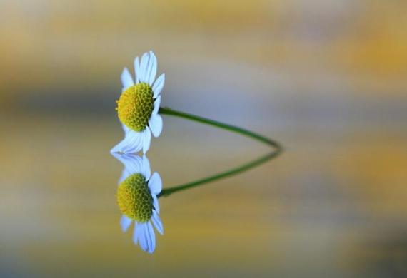 Θέλεις χαρά; Θέλεις ευτυχία; Ξέχνα τον εαυτό σου και αγάπα τους άλλους